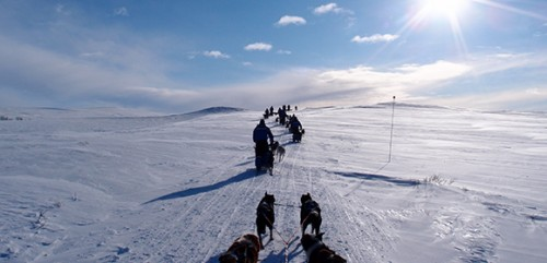 The Husky Trail
